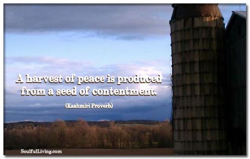 Peace Harvest
