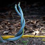 Snake Awakening
